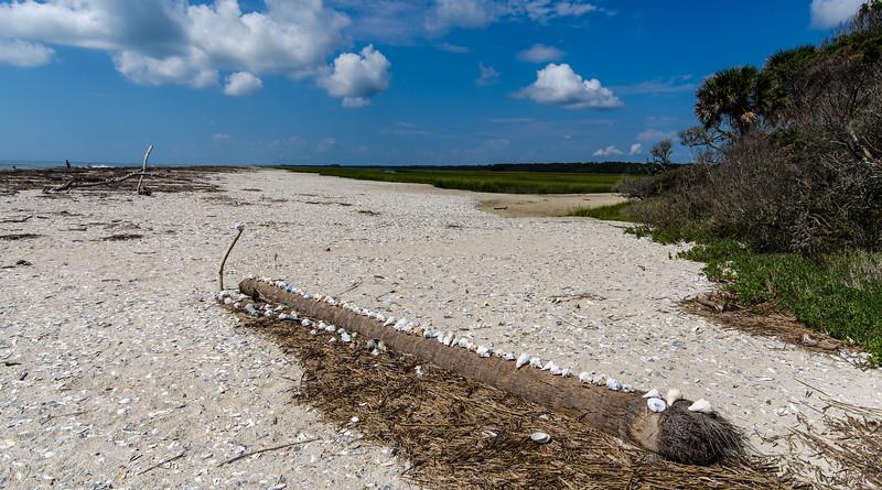 Shells On A Palm - Botany Bay WMA, Edisto Island, SC
