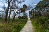 Road To The Beach - Botany Bay WMA, Edisto Island, SC