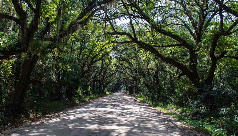 September: Canopy Road - Botany Bay WMA, Edisto Island, SC