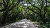 September: Canopy Road - Botany Bay WMA, Edisto Island, SC