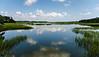 October: Jason's Lake - Botany Bay WMA, Edisto Island, SC