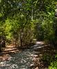 Spanish Mount Trail I - Edisto Island State Park, Edisto Island, SC