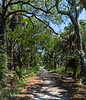 Beach Trail - Botany Bay WMA, Edisto Island, SC