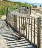 Dune Fence- Edisto Beach, SC