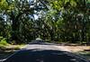 Canopy Road SC 174 - Edisto Island, SC