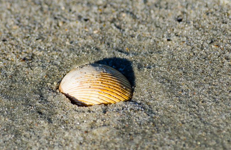 Sea Shell @ Burkes Beach - Hilton Head Island, SC
