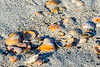 Sea Shells @ Burkes Beach - Hilton Head Island, SC