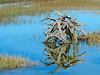 Stump in Marsh @ Pinckney Island NWR - Beaufort County, SC