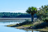 Palm Tree with Skull Creek behind it @ Pinckney Island NWR - Beaufort County, SC