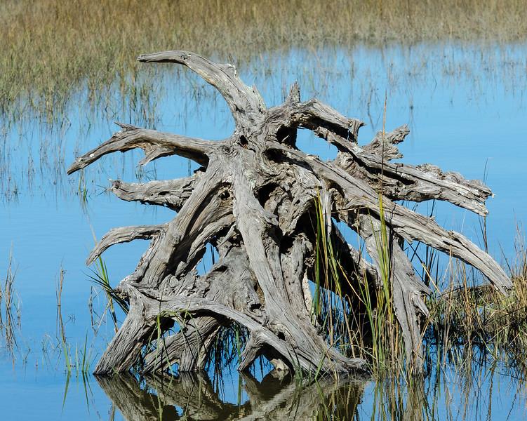 Stump @ Pinckney Island NWR - Beaufort County, SC