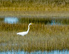 Great Egret II @ Pinckney Island NWR - Beaufort County, SC