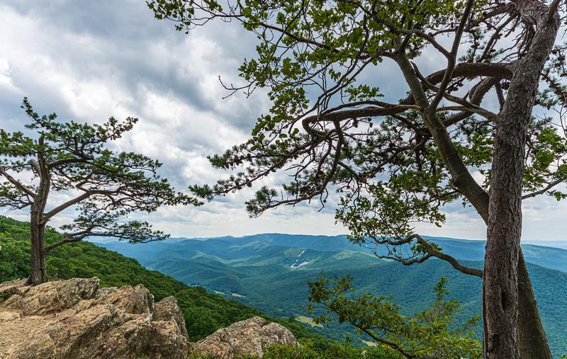 Trees & Mountains - Ravens Roost Overlook @ MP 10.7 on the Blue Ridge Parkway - Lyndhurst, VA