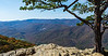 Southwest View & Tree from Ravens Roost Overlook @ MP 10.7 on the Blue Ridge Parkway - Lyndhurst, VA, USA