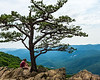 Most Photographed Tree - Ravens Roost Overlook @ MP 10.7 on the Blue Ridge Parkway - Lyndhurst, VA, USA