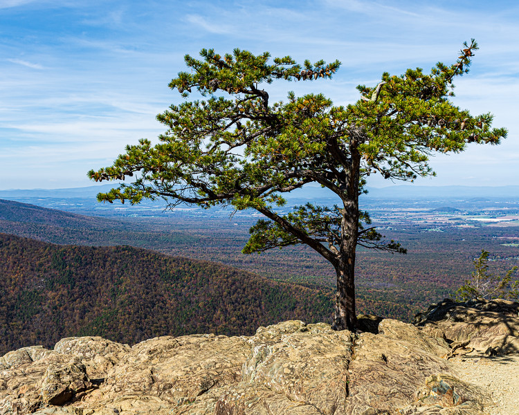 Iconic Ravens Roost Tree from Ravens Roost Overlook @ MP 10.7 on the Blue Ridge Parkway - Lyndhurst, VA, USA