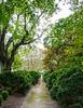Boxwood Path @ Eyre Hall - Cheriton, VA