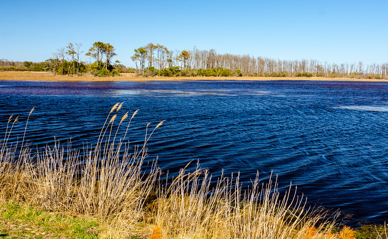 Shoveler Pool on Wildlife Loop @ Chincoteague NWR - Chincoteague, VA