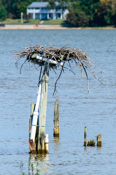 Osprey Nest @ Sloop Point - Claremont, VA