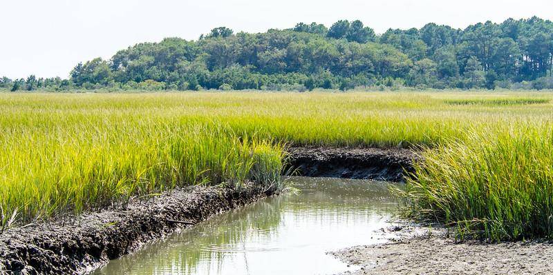 Raccoon Creek @ Eastern Shore NWR - Northampton County, VA