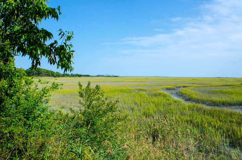 Marsh @ Eastern Shore NWR - Northampton County, VA