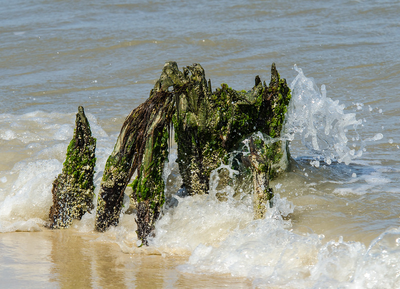 Beach Tree Stump @ Bethel Beach Natural Area Preserve - Matthews County, VA