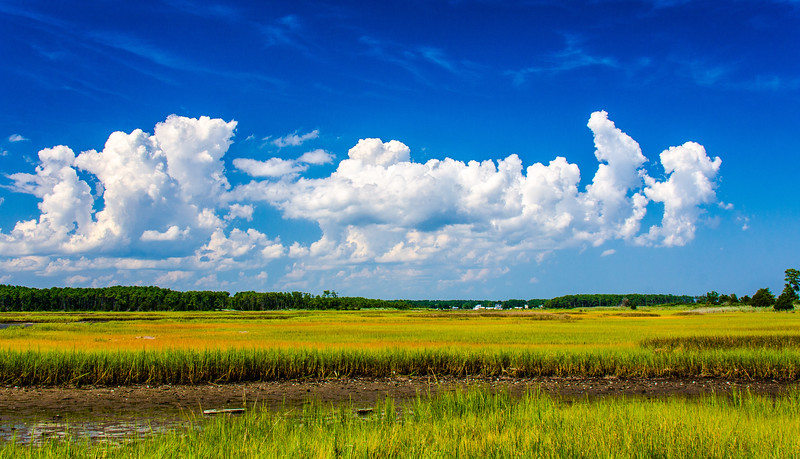 FO - Mathews County Marsh - Diming