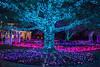 Tree @ Lewis Ginter Botanical Garden - Richmond, VA