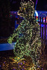 Bear @ Lewis Ginter Botanical Garden - Richmond, VA