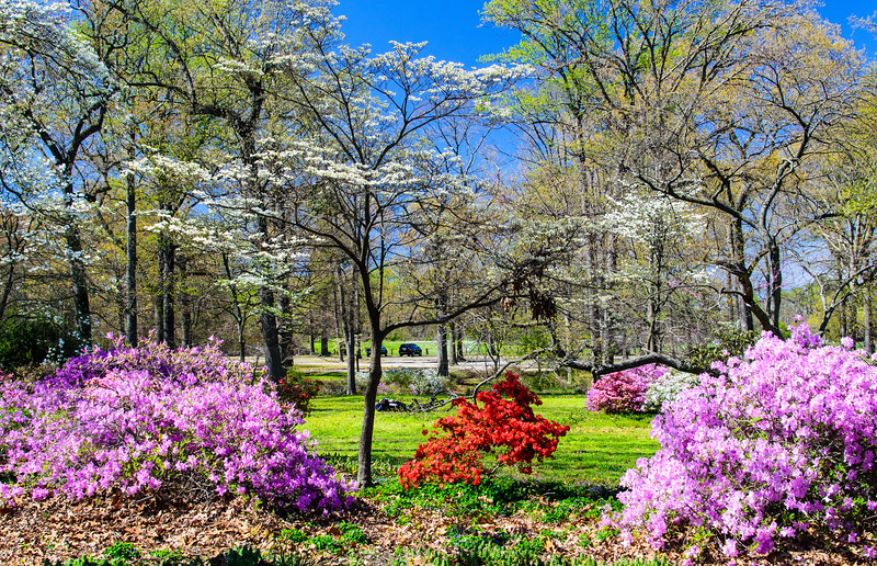 Azalea Garden @ Joseph Bryan Park - Richmond, VA