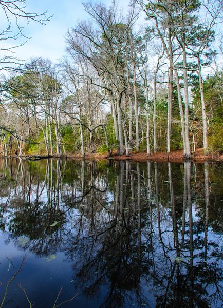 Custis Pond @ Savage Neck Dunes NAP - Northampton County, VA