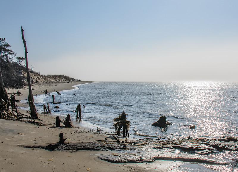 Stumps & Beach @ Savage Neck Dunes NAP - Northampton County, VA