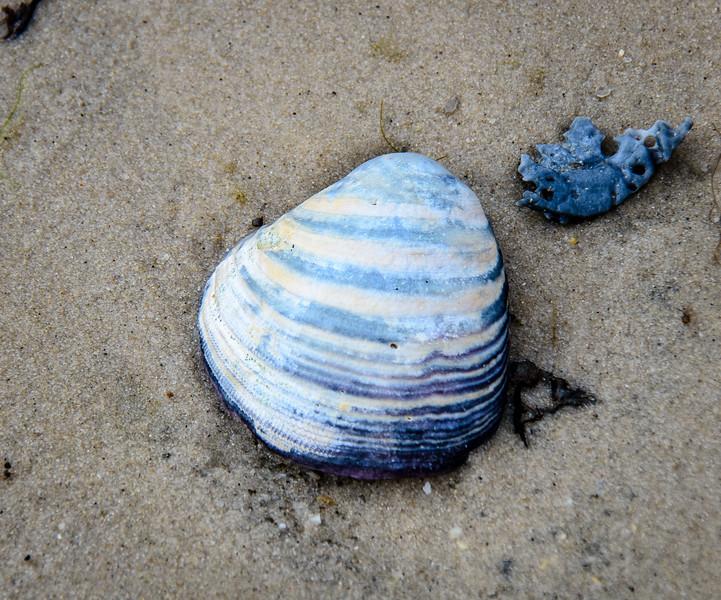 Shell @ Savage Neck Dunes NAP - Northampton County, VA