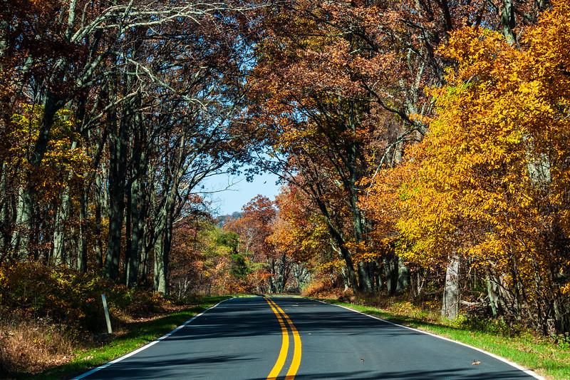 Mile 91, Skyline Drive, Shenandoah National Park, Grottoes, VA