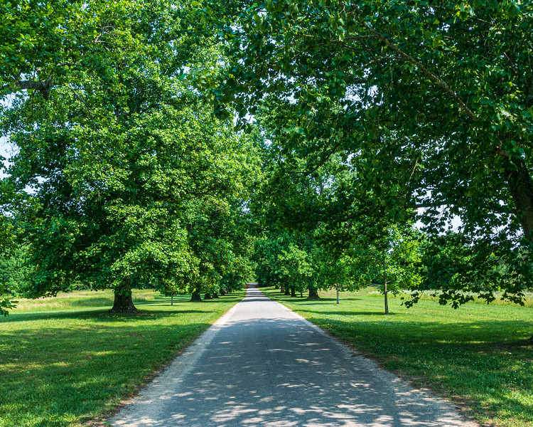 Smiths Fort Lane @ Smith's Fort Plantation - Surry, VA, USA