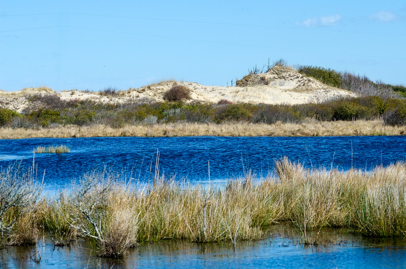 Pond & Dune @ Back Bay NWR - Virginia Beach, VA