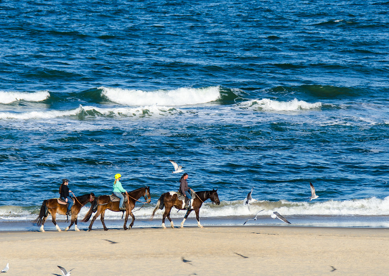 Riding Horses on the Beach - Virginia Beach, VA