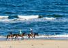 Riding Horses on the Beach - Virginia Beach, VA