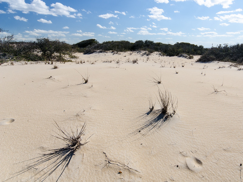 Windblown Sand @ Back Bay NWR - Virginia Beach, VA