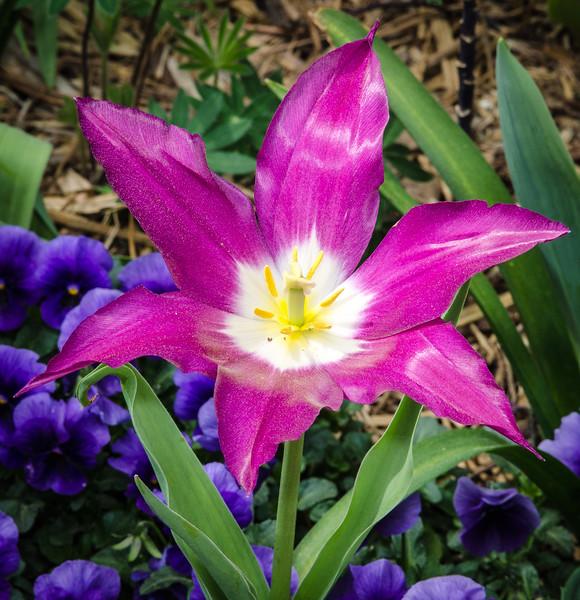 Star-shaped Flower @ Norfolk Botanical Garden - Norfolk, VA