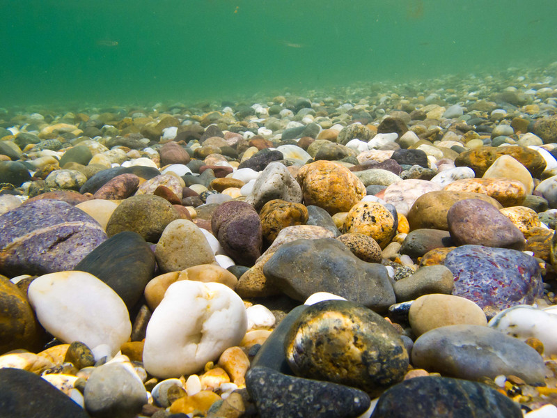 underwater view at Herring Cove.   20 to 30 foot visibility.