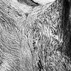Closeup of wood grain on a dead oak