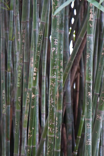 graffiti on bamboo.