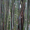graffiti on bamboo.