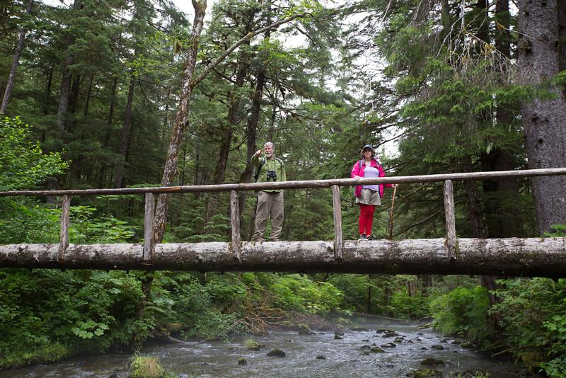 typical tree bridge.