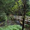 fallen tree bridge