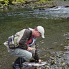 Pink Salmon landed while fishing for dolly varden trout.
