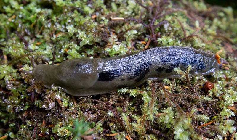 camo pattern slug. 6+ inches long