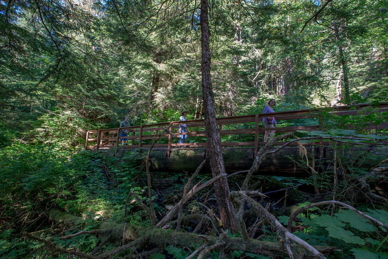 in well maintained trails, large trees are felled to produce bridges over ravines and streams.  This is a very well constructed example.