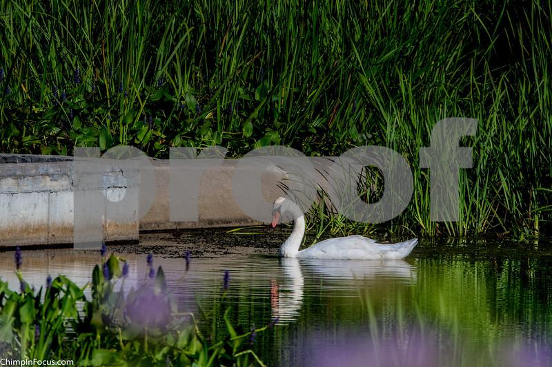 On Swan Lake