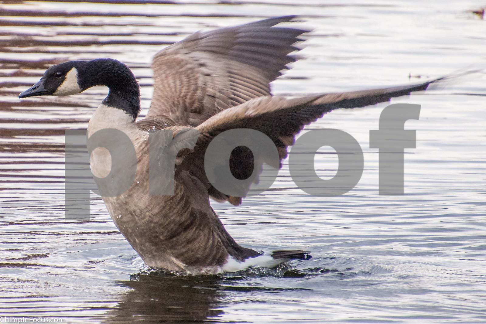Dancing on the Lake